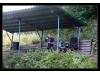 27_svinna-nohejbal--20.8.2011--01.jpg