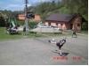 94_cimg3240.jpg